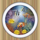 Underwater ship porthole tropical fish Royalty Free Stock Images
