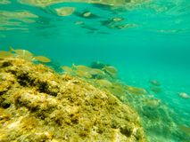 Underwater shoal of fish royalty free stock photography