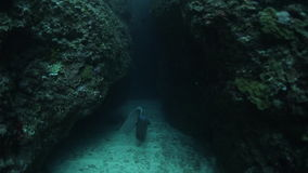 Underwater shoot of freediver. Swimming through the underwater canyon stock footage