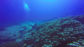Underwater shoot of a scuba divers swimming in blue clear water. Underwater shoot of a scuba divers swimming in a blue clear water stock video footage