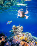 Underwater shoot of a young boy snorkeling in red sea. Underwater shoot of a young boy snorkeling and diving in a tropical red sea coral reef with Klunzinger's royalty free stock photography