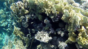 Underwater shooting of corals in Red Sea, Egypt stock video