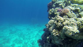 Underwater shot of colorful corals stock video footage