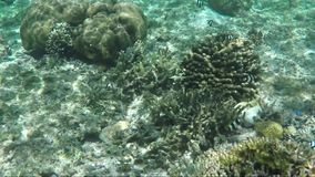 Underwater shot of coral reef and plants. View of underwater ocean world with coral reefs, plants and fish stock video