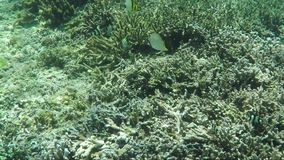 Underwater shot of coral reef, tropic fish and plants. View of underwater world with coral reefs, plants and exotic fish stock video footage