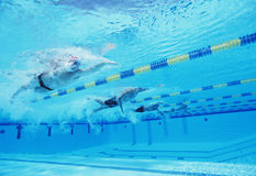 Underwater shot of four male athletes competing in swimming pool Royalty Free Stock Photo