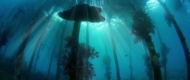 Underwater shot of an old jetty, overgrown with soft corals, silhouette with sunbeams. Raja Ampat, Indonesia stock footage