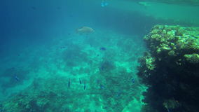 Underwater shot of sea life stock video footage