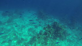 Underwater shot of small fishes swimming in deep sea stock video