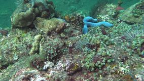 Underwater shot of starfish, wonderful and beautiful underwater world with corals and tropical fish. Hard and soft corals stock footage
