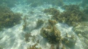 Underwater shot with sunrays, bubbles and flock of fish in tropical sea. Malta. Underwater shot of the sea sandy bottom. Underwater shot with sunrays, bubbles stock video footage