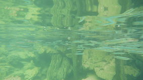 Underwater shot of tropical fish stock footage