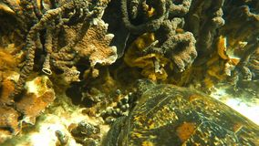 Underwater shot of a turtle. An underwater close up shot of a turtle stock video