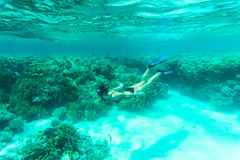 Underwater shot of the young lady gliding over vivid coral reef on a breath hold in sea water. Underwater shot of the young lady gliding over vivid coral reef on Stock Photo