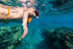 Woman snorkeling above coral reef. Underwater shot of a young woman snorkeling in tropical sea above coral reef stock photography