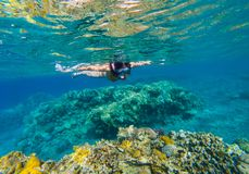 Woman snorkeling above coral reef stock image