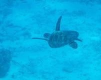 Underwater shots at Lagun Stock Photography