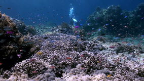 Underwater slope of reef in sea Schools color fish. Slope of the reef in blue sea and schools of colorful fish. beautiful underwater world Bali Indonesia and stock video footage