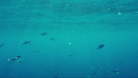 Underwater slow motion video: Rampage of the underwater life. Stealth fish eat plankton in the sun`s rays near the stock video