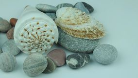 Underwater stones and shells. Small group of river shells and stones stock video