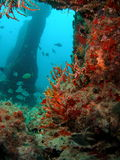 Underwater Structure. And coral at 45 ft in south Florida Stock Photo