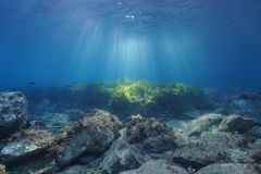 Underwater sunbeams seabed with rocks and seagrass. Underwater seascape natural sunbeams through water surface on a seabed with rocks and seagrass, Mediterranean Stock Images