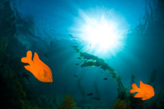Underwater sunlight Royalty Free Stock Photography