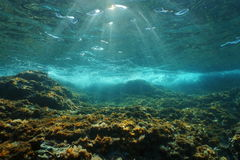Underwater sunlight rocky seabed Mediterranean sea. Underwater sunlight through the water surface seen from a rocky seabed with algae in the Mediterranean sea Royalty Free Stock Photography