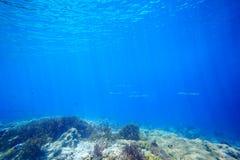 Underwater  sunlight scena coral reef Stock Images
