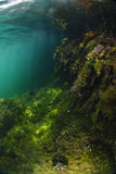 Underwater and sunlit Royalty Free Stock Photography