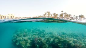 Underwater surface split view of coral fish and resort beach. Underwater surface split view in the tropics paradise with fish and coral reef, above waterline stock footage