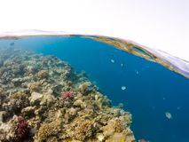 Underwater surface split view of coral fish Stock Photos