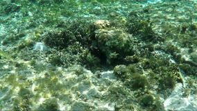 Underwater survey of coral reef. View of underwater world with coral reefs, plants and fish stock footage