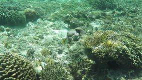 Underwater survey of coral reef. View of underwater world with coral reefs, plants and fish stock video