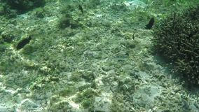 Underwater survey of coral reef. View of underwater world with coral reefs, plants and fish stock video footage