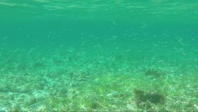 Underwater survey of large flock of fish. Underwater shot of large flock of fish with drops and bubles on water surface stock video footage