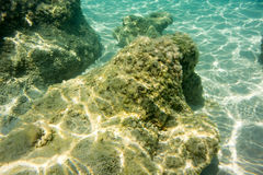 Underwater texture and fauna in Ionian sea. Zakynthos, Greece Stock Photography
