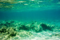 Underwater texture and fauna in Ionian sea. Zakynthos, Greece Stock Photos