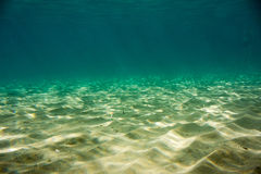 Underwater texture and fauna in Ionian sea. Zakynthos, Greece Royalty Free Stock Photography