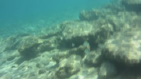 Underwater texture and fauna in Ionian sea, Zakynthos, Greece stock video footage