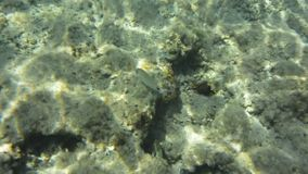 Underwater texture and fauna in Ionian sea, Zakynthos, Greece stock footage