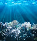 Underwater Royalty Free Stock Photos