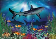Underwater tropical card with shark Stock Images