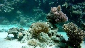 Underwater,   Tropical fish. stock video