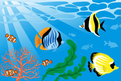 Underwater, Tropical Fish and Sea Life. Vector illustration of Underwater, Tropical Fish and Sea Life Stock Photography