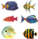 Underwater Tropical Fish Set Royalty Free Stock Photography