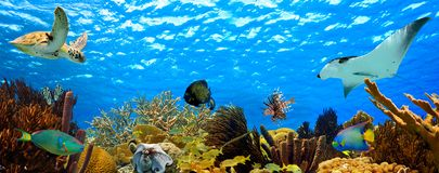 Underwater tropical reef panorama Royalty Free Stock Photography