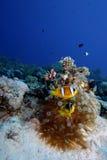 Underwater tropical reef scene Stock Photo