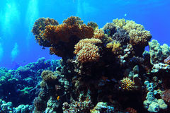 Underwater tropical sea view Royalty Free Stock Image
