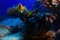 Underwater tropical sea view Stock Photography